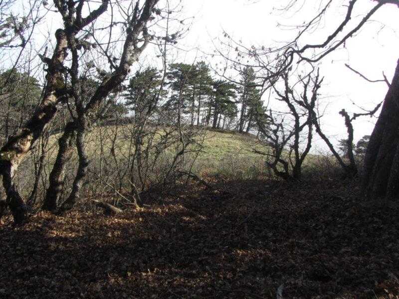 Старт уже просматривается за деревьями