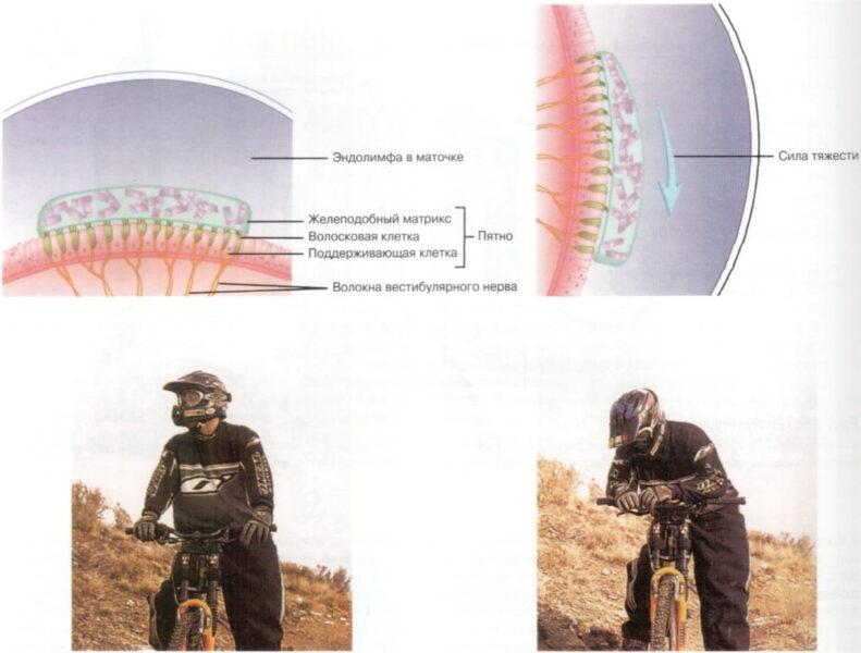 Как справиться с укачиванием: можно ли натренировать вестибулярный аппарат